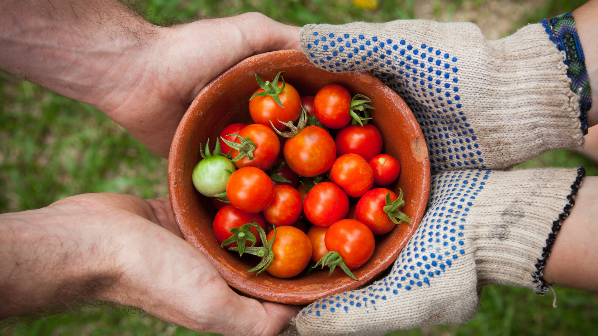 a bowl of tomatoes is shared in the hands of two people