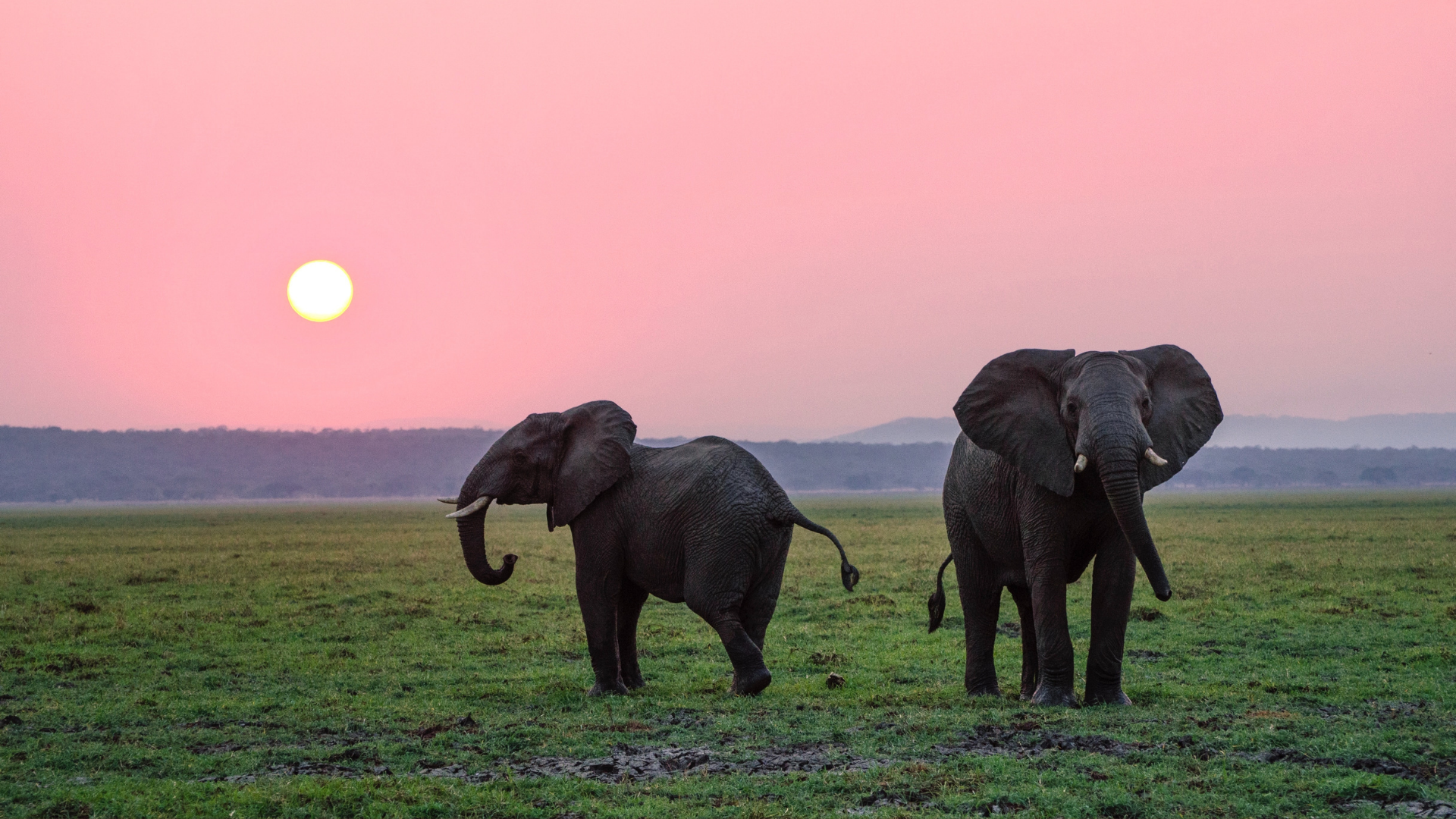 two elephants at sunset